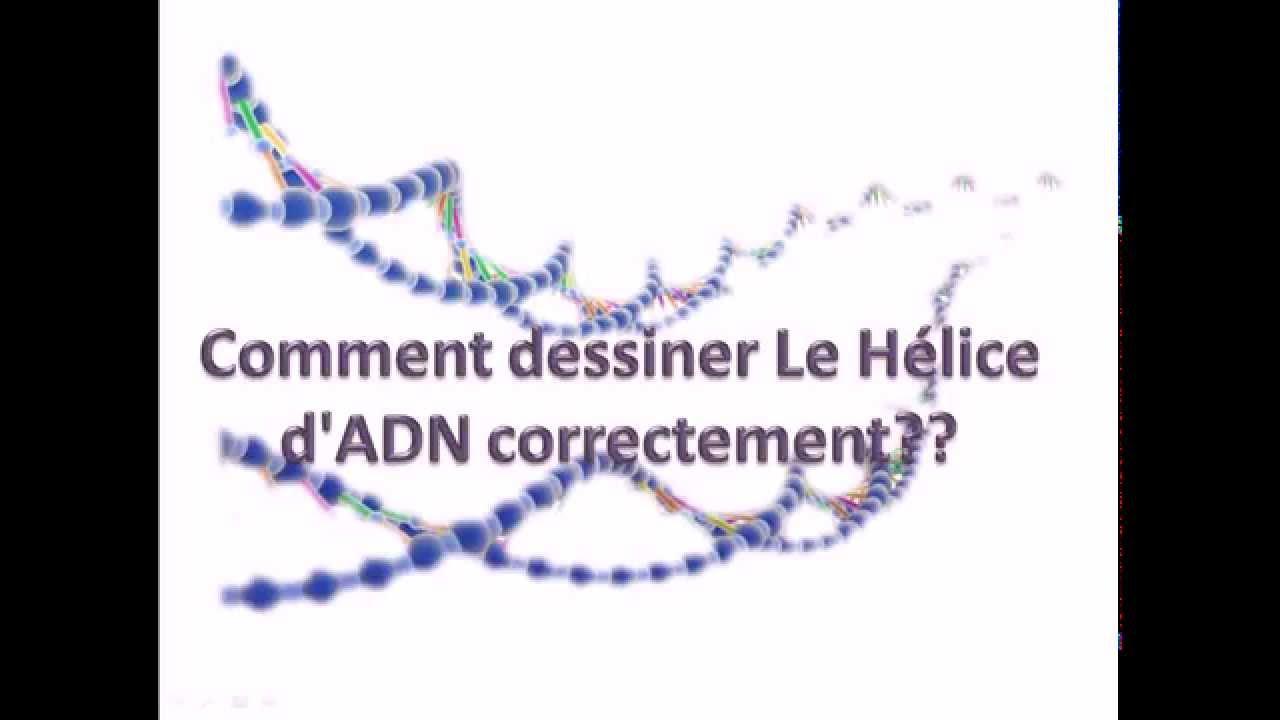 Comment dessiner le h lice d 39 adn correctement youtube - Comment dessiner le drapeau d angleterre ...