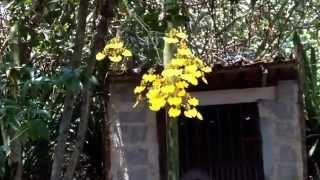 """Vento de Primavera - com """"O Vento (Vamos chamar o vento)"""" (Dorival Caymmi)."""