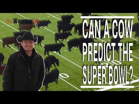 The Ranch, The Herd And Super Bowl LII