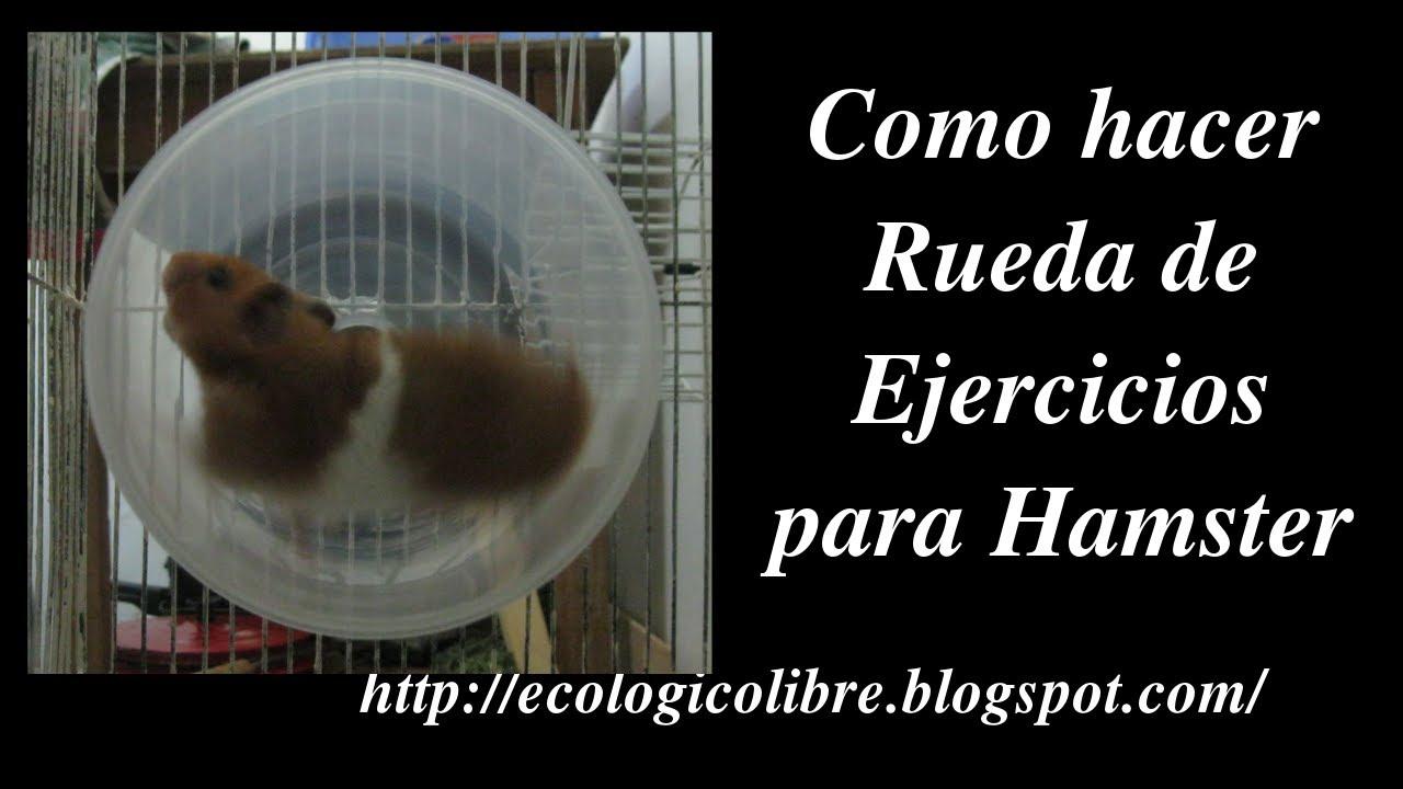 Como hacer rueda de ejercicios para hamster u otros - Como hacer helados caseros ...