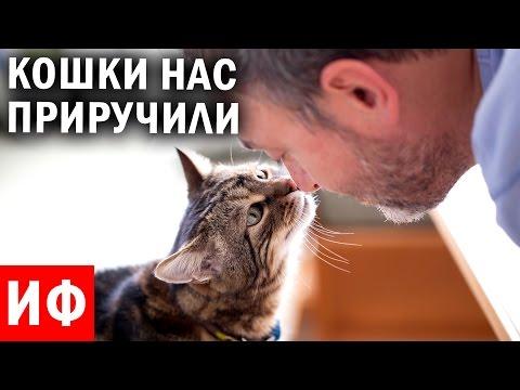 КАК КОШКИ нас ПРИРУЧИЛИ? История кошек и древние люди #ИФ