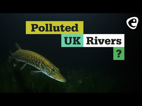 What is the state of UK rivers?