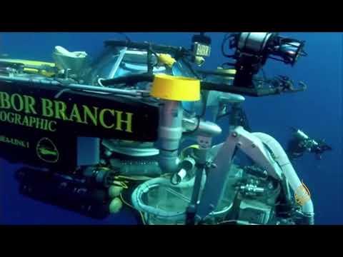 هذا الصباح- أبحاث لإنتاج مضادات حيوية من الإسفنج البحري  - 11:22-2018 / 7 / 12