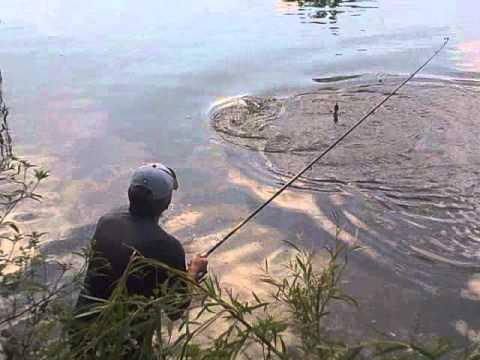 ловля толстолобика на волге как поймать