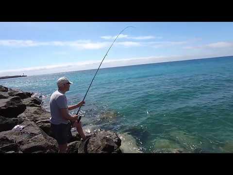 FLATHEAD GREY MULLET Sea Fishing With Bread  [Mugil Cephalus]