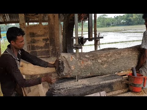 Bunch of Rain Tree with Skilled Wood Workers Cutting।Hot Summer Wood Cutting (4K) Video।Wood Cutting