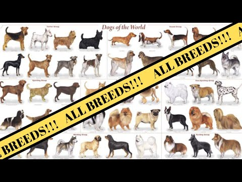 7 Dog Breed Groups | Breed of Dogs
