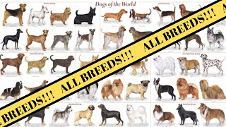 All Breeds of Dogs around the World | Breed of Dogs AZ