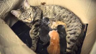 кошка родила котят....