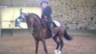 Caballo lusitano Vanidoso