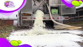لماذا يقوم المزارعون الامريكيين بالتخلص من ألاف الاطنان من الحليب !