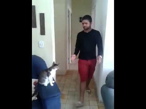 Cat Gives High Five & Fist Bump
