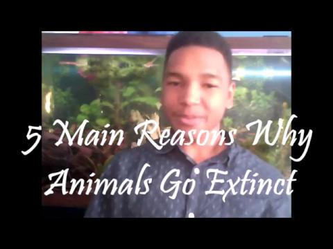 5 Main Reasons Animals go Extinct