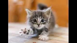 Бездна Анального Угнетения - Котята
