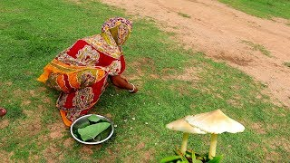 Finding Natural DURBA CHATU (Mushroom) from Play Ground and Cooking Recipe | Village Food