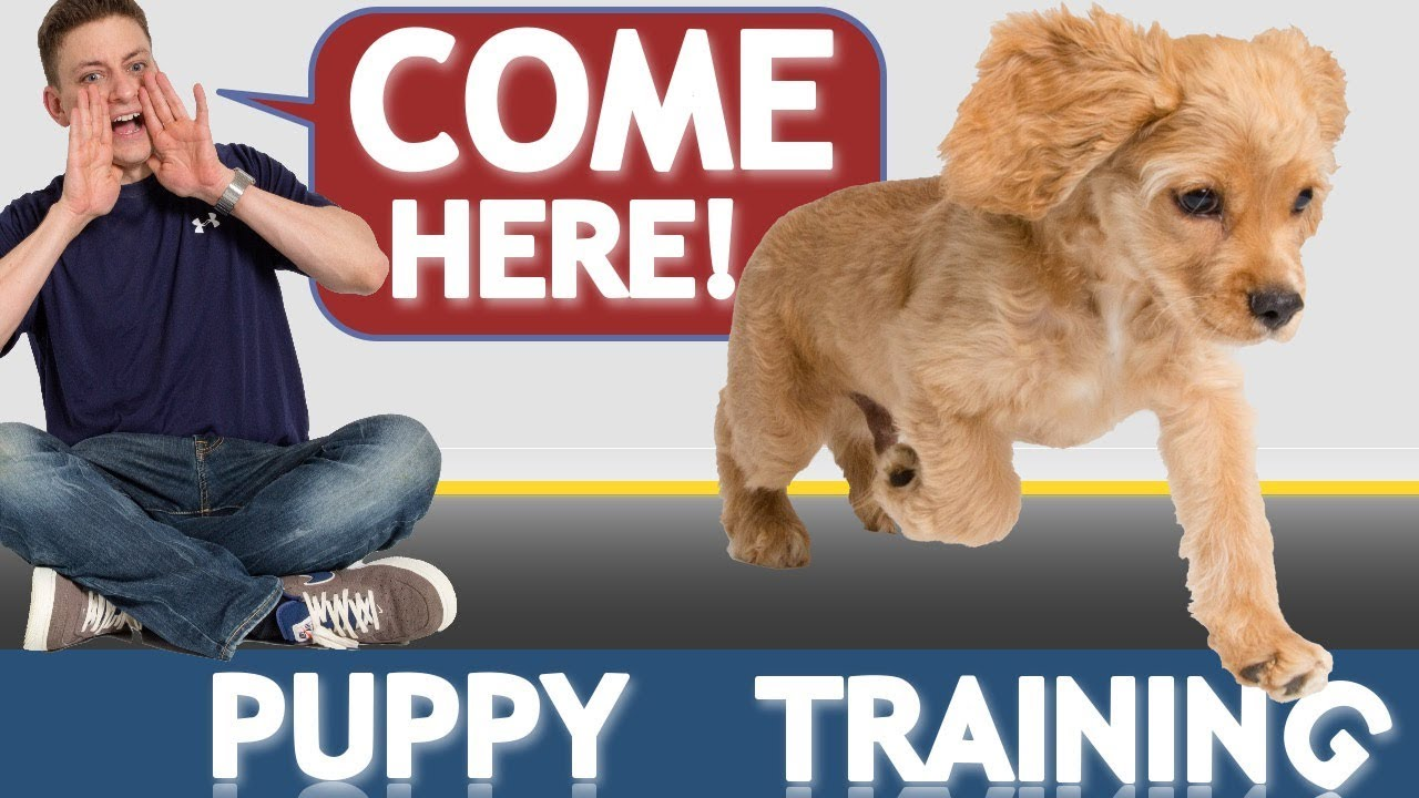 How to Train your Puppy to Come When Called NOW AND FOREVER!