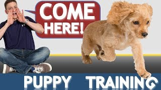 how to train your puppy to come when called now and forever