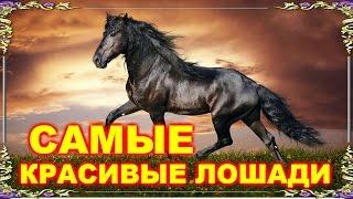 Самые красивые лошади мира! Видео-релакс.