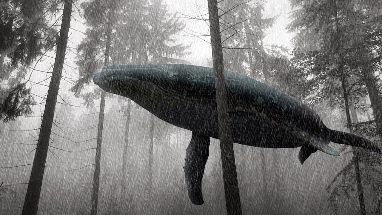 A Whale In The Forest Fantasia Youtube