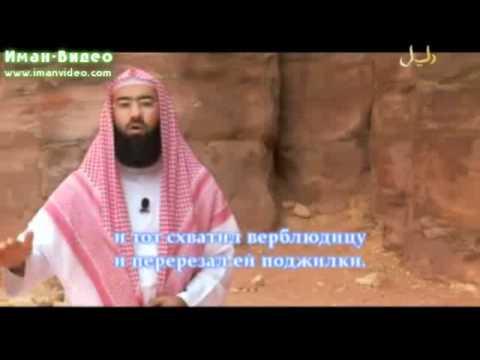 Истории о пророках
