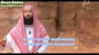 Истории о пророках Салих (а.с.)(Видео-передача «Истории о пророках», ведущий Набиль аль-Авады, рассказывает истории пророков, начиная с..., 2011-01-05T04:06:50.000Z)