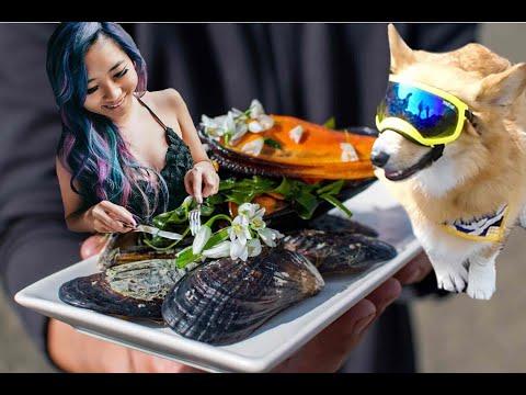 Coastal Foraging With INSTA FAMOUS Corgi And Foodie