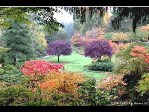 Beautiful Flower Garden Video YouTube