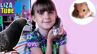Мой вечер Крыски хомячок Гуля и котики Лиза и питомцы LizaTube