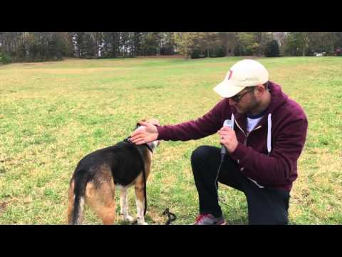 Field Test: Harness Lead by harnesslead.com