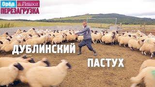 Ирландские приключения пастуха Антона! Орёл и Решка. Перезагрузка
