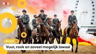 Paarden oefenen voor Prinsjesdag op het strand van Scheveningen
