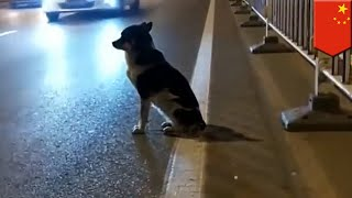 Sad dog story: Canine waits 80 days for owner to return - TomoNews
