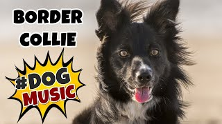 BORDER COLLIE Relaxing Music for Dogs ~ Calming Music For Dogs ~ Separation Anxiety Music (Tested)