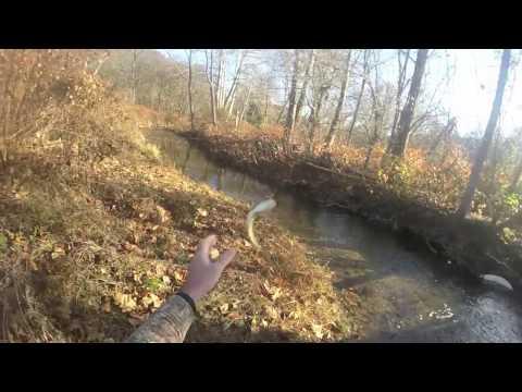 Fly Fishing Bald Eagle Creek