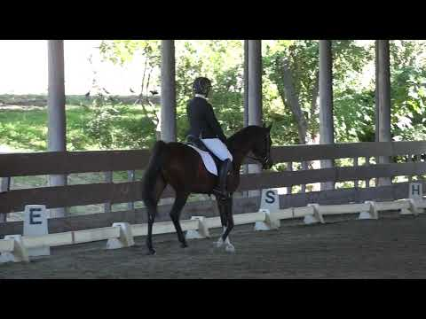 Razzleberry Jammin & Stacia Arnold - Training Level Test 2 - ICC Fall Rated Show 2018