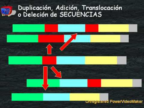 Creacionismo ¡A prueba! 2 - Mutaciones (1de4) Introducción