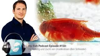 my-fish.org - Die Haltung und Zucht von Urzeitkrebsen (Ben Schneider)