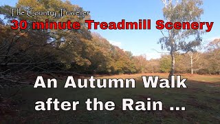 30 minute Treadmill Scenery - An Autumn walk in the woods after the rain for exercise or pleasure...