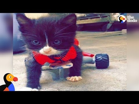 Paralyzed Kitten Changes His Mom's Life | The Dodo