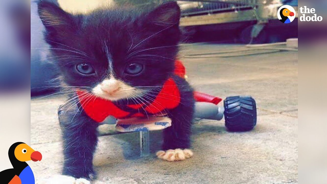 Paralyzed Kitten Changes His Mom's Life