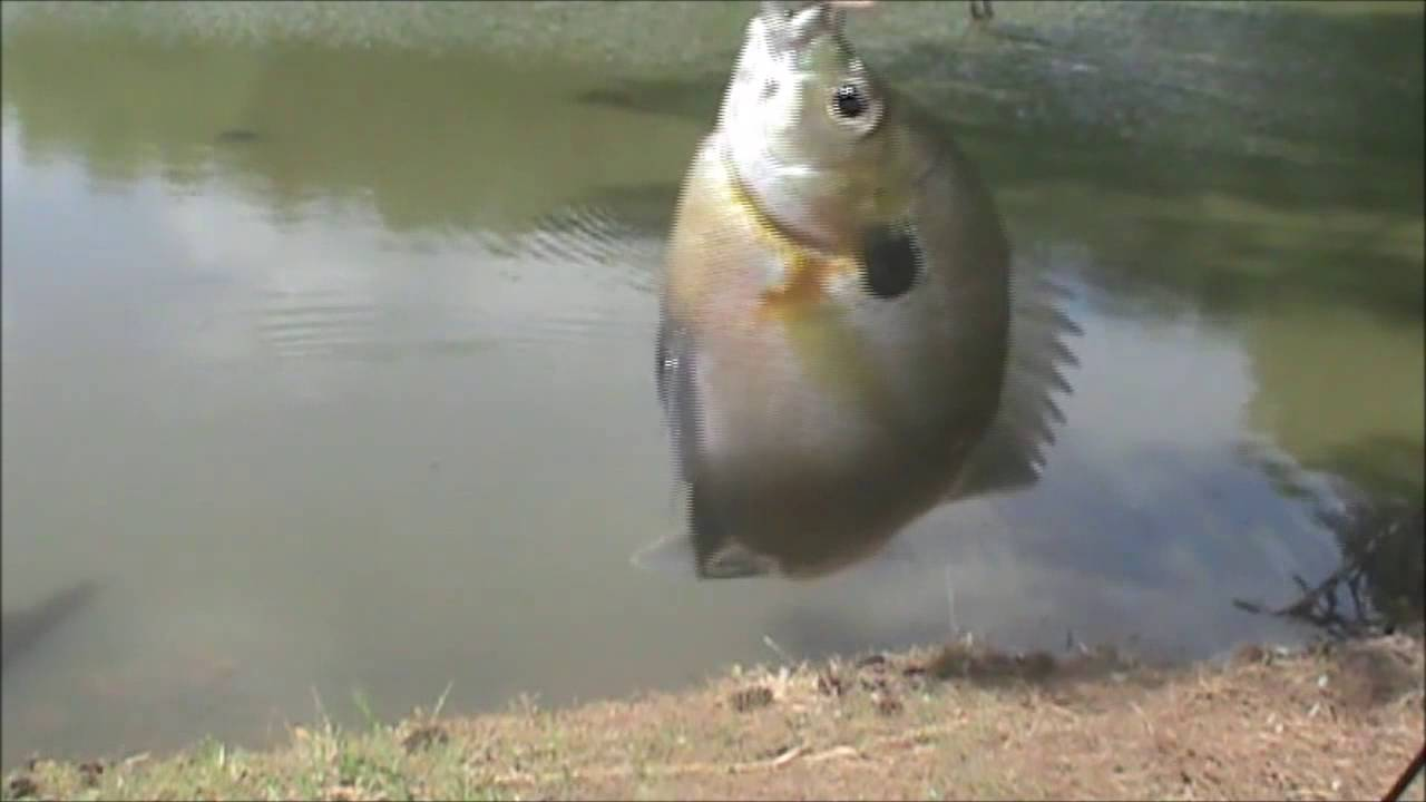 Fishing for Channel Catfish and Bluegill in