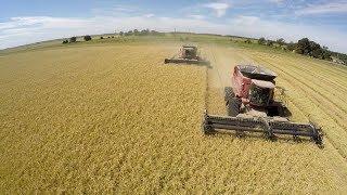 Arkansas Rice Harvest 2017