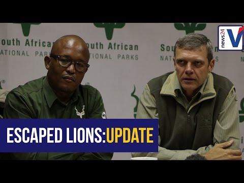 SANParks clears the air over the recent Kruger Park lions escape