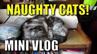 Narrowboat Journeys - Mini Vlog: A little present from the cats!
