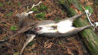 三年目狩猟生活(その65)