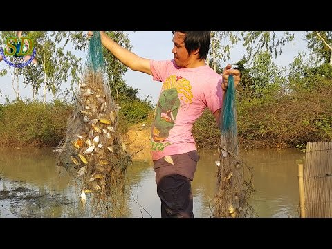 Wow! Amazing Net Fishing In Tonle Sap Lake || Crazy Net Fishing