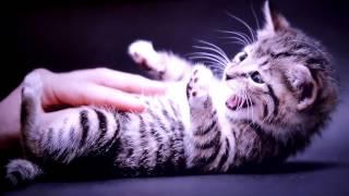 Что нужно знать о кошке