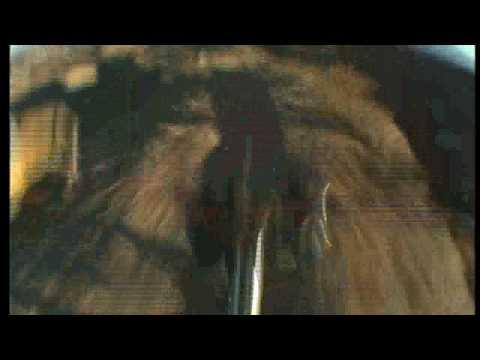 Statement MTB Movie Trailer 2003