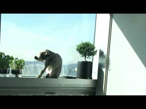 🐾 햇살 좋은날의 고양이들~!