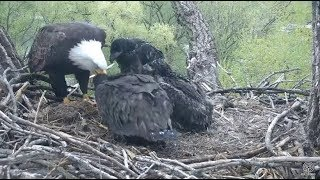 Decorah Eagles~N2B-No Break For This Mom-Business As Usual-Happy Mother's Day_5.13.18
